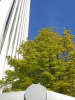 Tree with Fresh Leaves, Downtown Portland