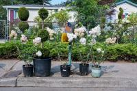 plants for sale in front of a house