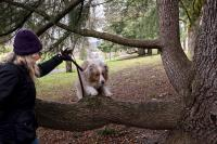 Dog jumping over low branch of a tree in Gabriel Park