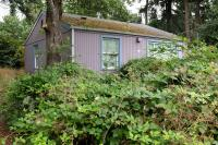 small house behind over grown blackberry bushes