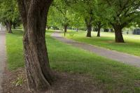 Powell Park, trees and path